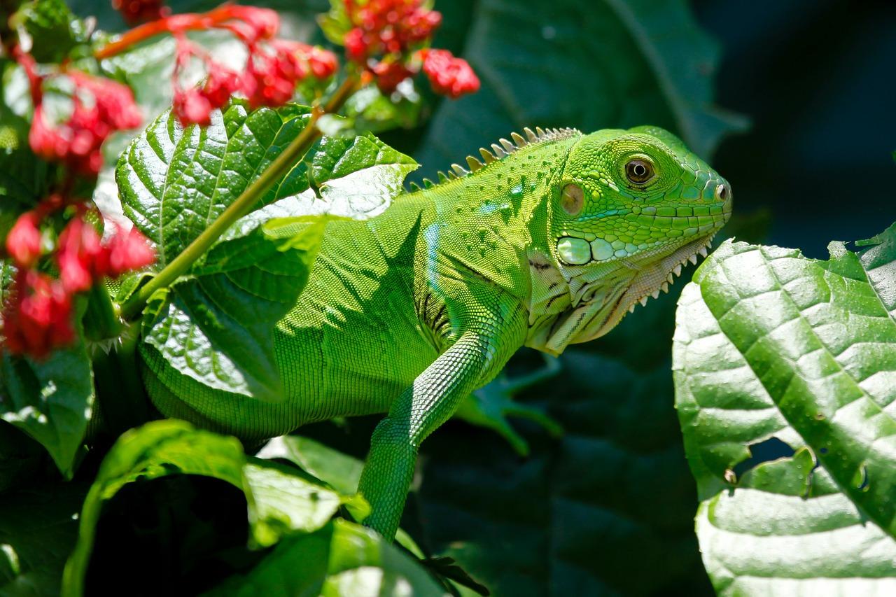 Red ambiental y especies en riesgo